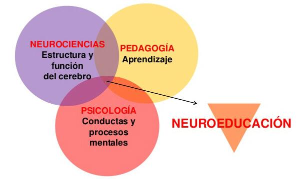 pilares de la neuroeducación
