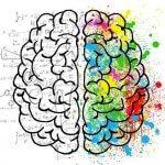 Las bases de la neuroeducación