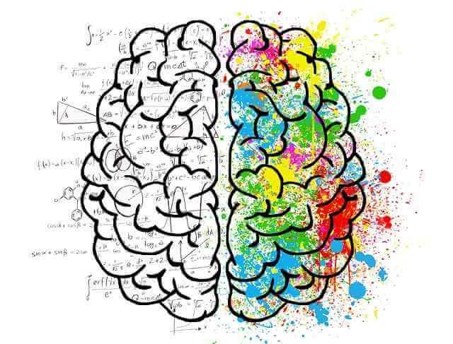 Bases de la neuroeducación