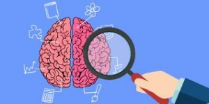 Neuroeducación(11)